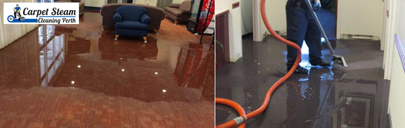 Carpet Water Damage Restoration Pest